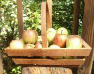 Backyard Apple Butter